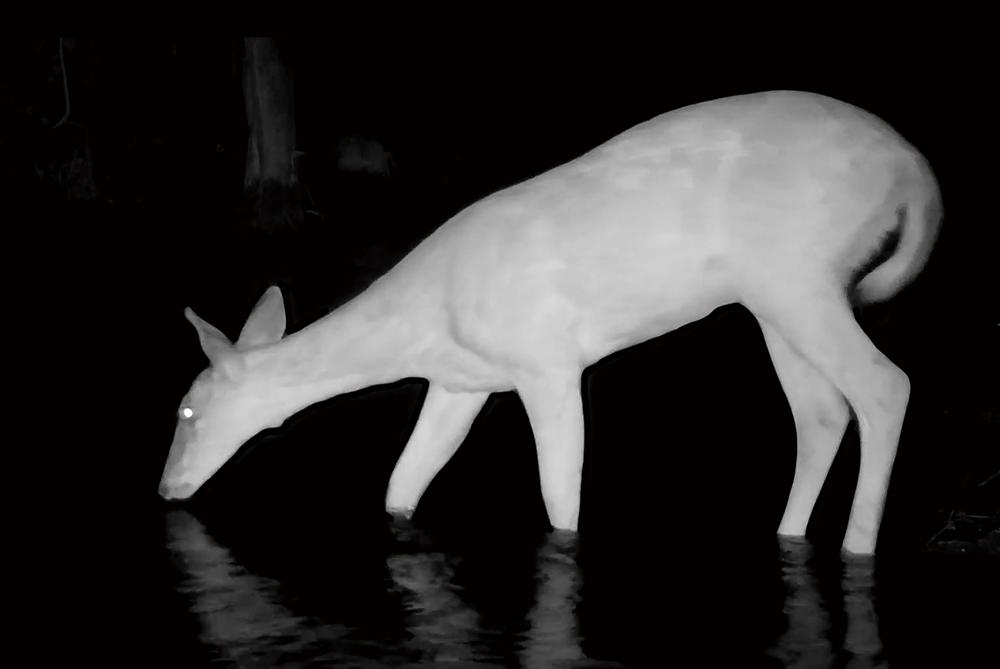 トロフィーカムXLT 30MPローグロウDC デュアルイメージコア夜間