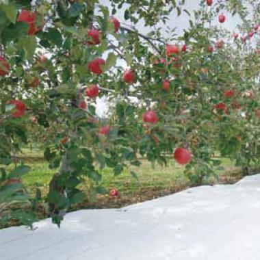 ルンルンシート白ピカ 果樹りんごに設置